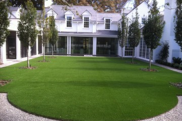 Lawn (Sod and Synthetic Grass)